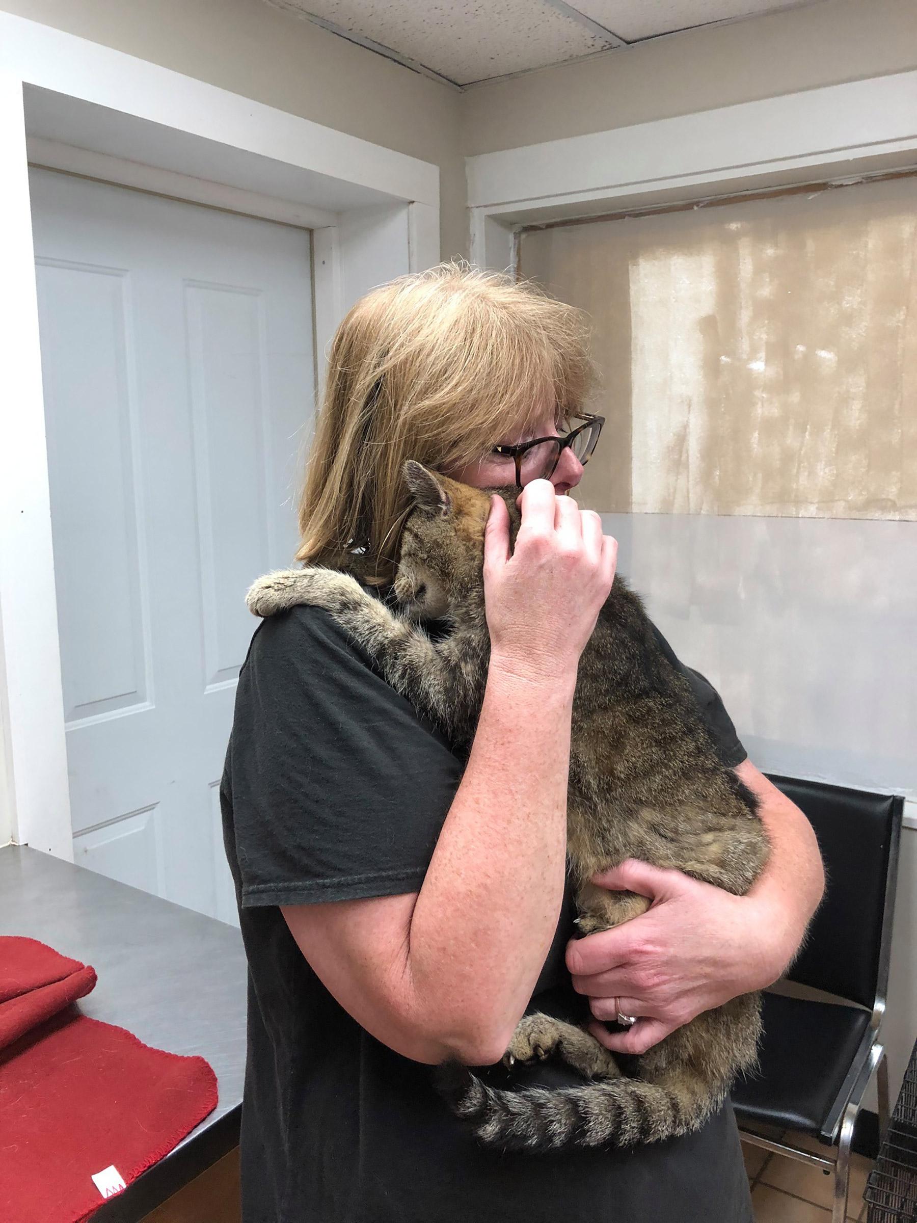 Gatto Tiger con la sua proprietaria