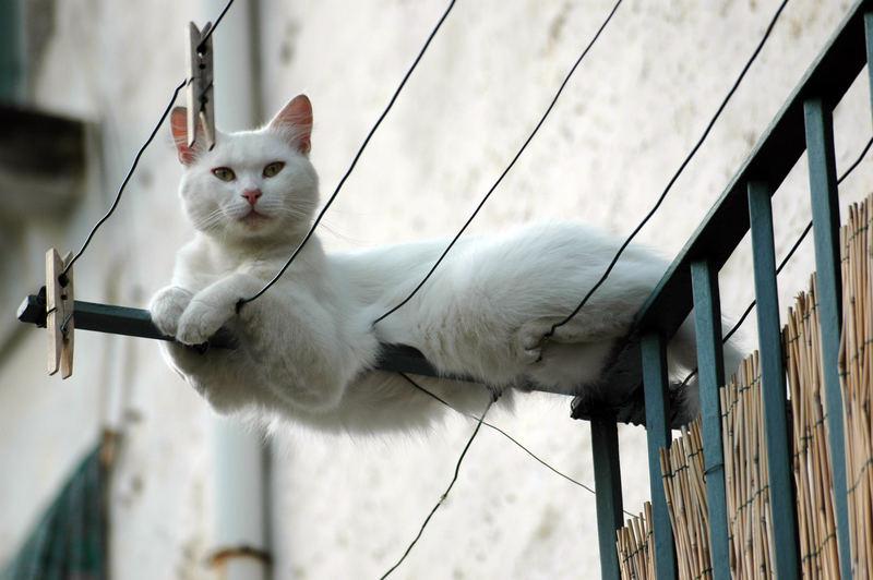 Gatto affacciato ad un balcone
