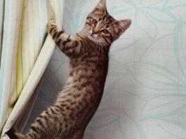 Gatto attaccato ad una tenda