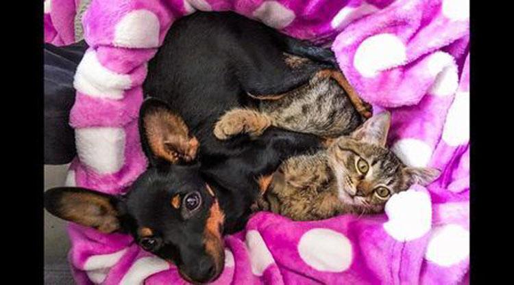 Gatto che dorme insieme ad un cane