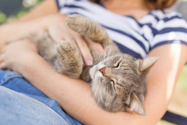 Gatto che dorme sulla pancia di una ragazza