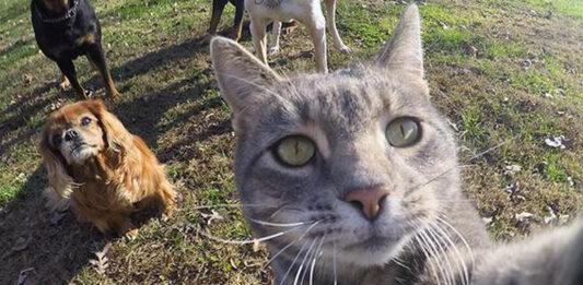 Gatto che fa un selfie