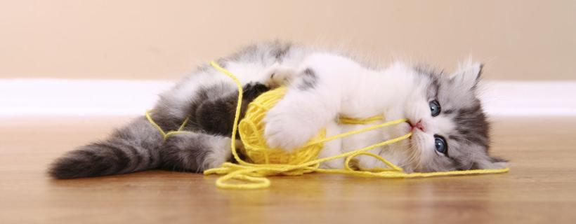 Gatto che gioca con un gomitolo