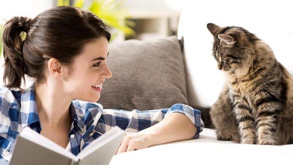 Gatto che guada la sua proprietaria