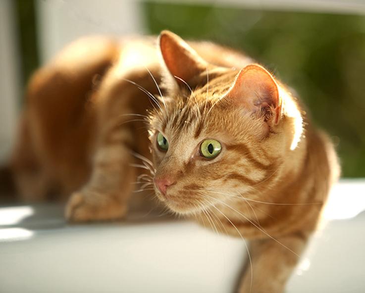 Gatto che guarda curioso