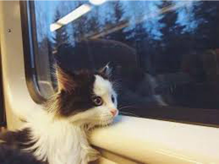 Gatto che guarda dal finestrino di un treno