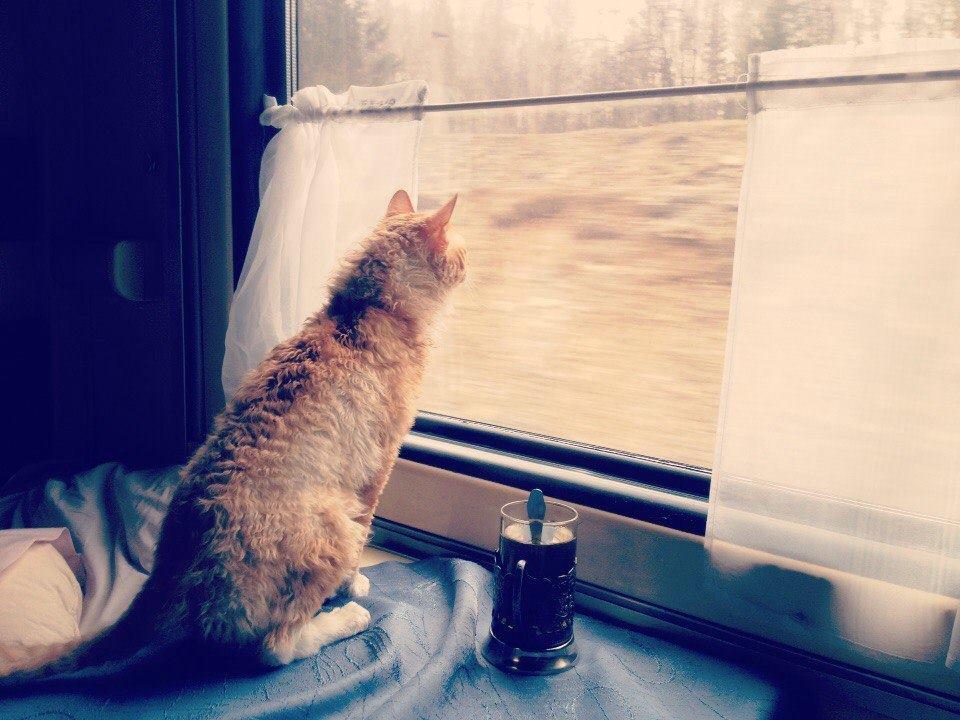 Gatto che guarda fuori da un finestrino
