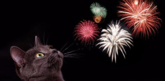 Gatto che ha paura dei fuochi d'artificio