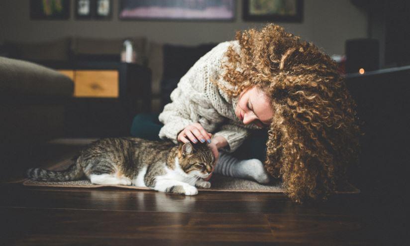 Gatto che si fa accarezzare da una ragazza