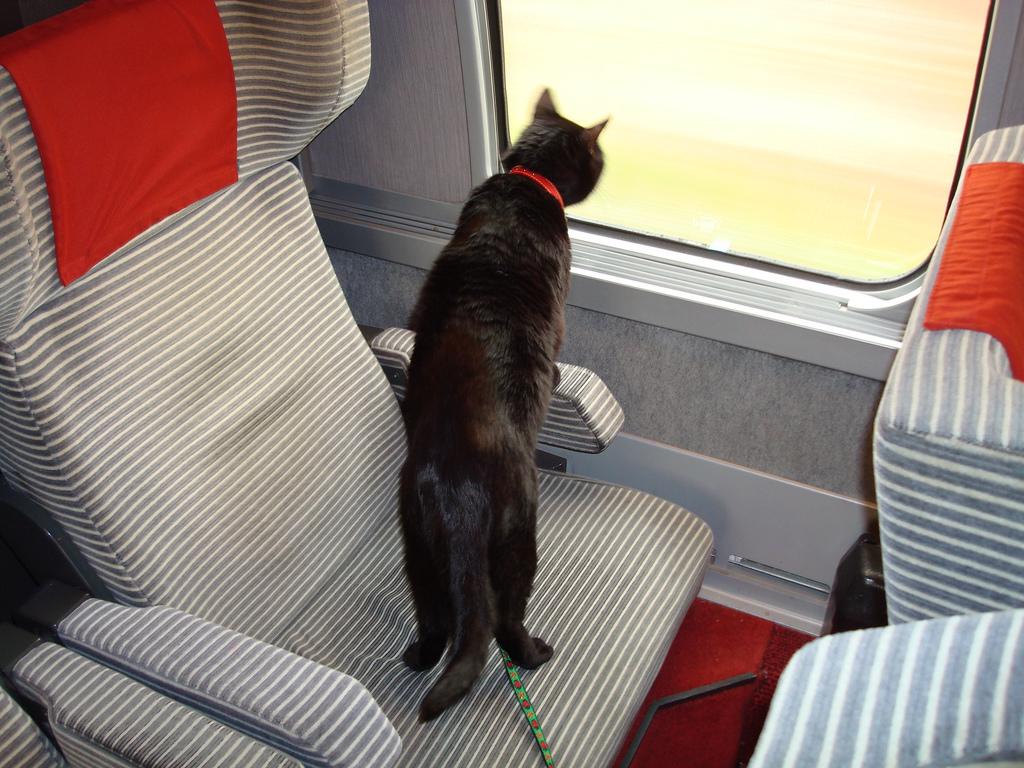 Gatto che viaggia in treno
