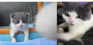 Gatto clonato in Cina