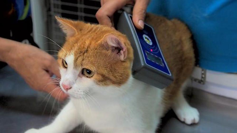 Gatto con microchip