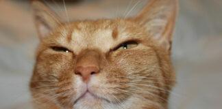 Gatto con occhi socchiusi