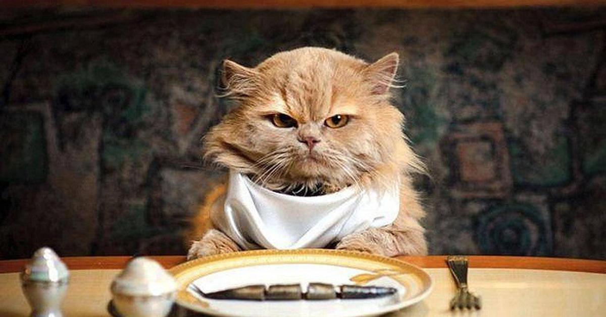 Gatto davanti alla tavola apparecchiata