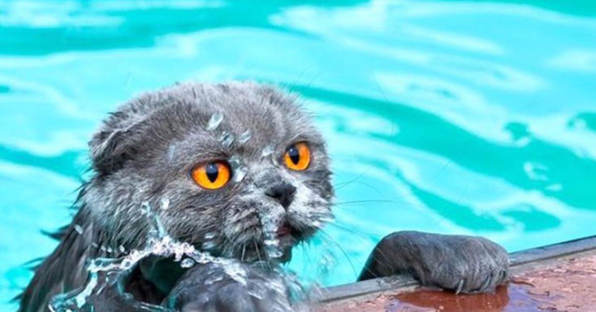 Gatto dentro l'acqua