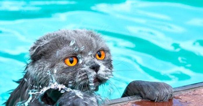 Gatto dentro una piscina