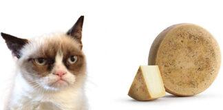 Gatto e formaggio