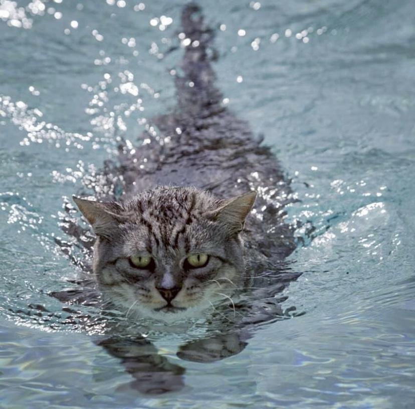 Gatto in acqua
