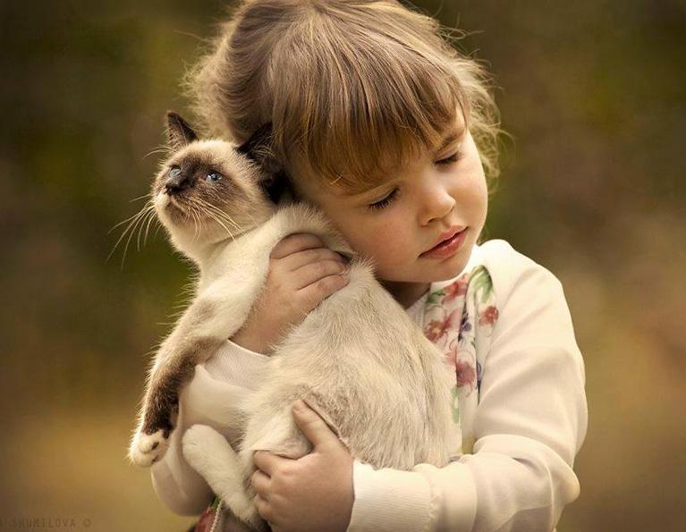 Gatto insieme ad una bambina