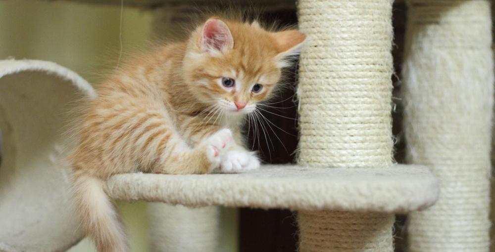 Gatto piccolo in un tiragraffi