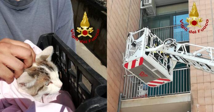Gatto precipitato da un balcone a Perugia