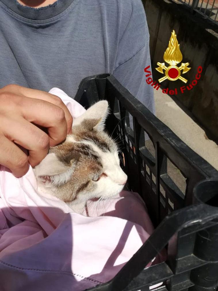 Gatto precipitato dal balcone