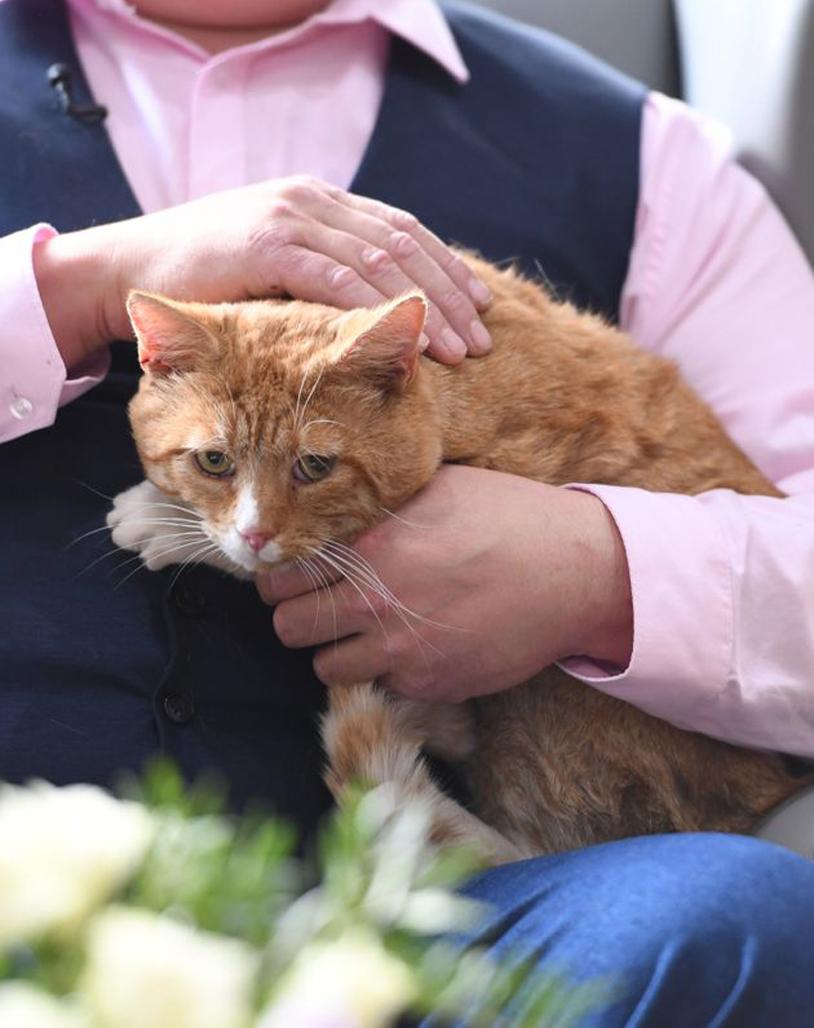 Gatto rosso in braccio ad un uomo
