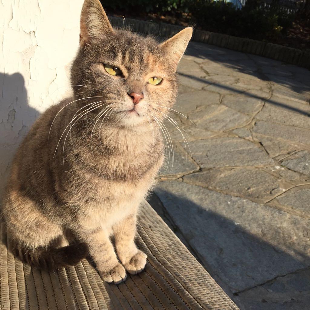 Gatto seduto al sole