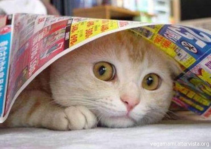 Gatto sotto un foglio di giornale