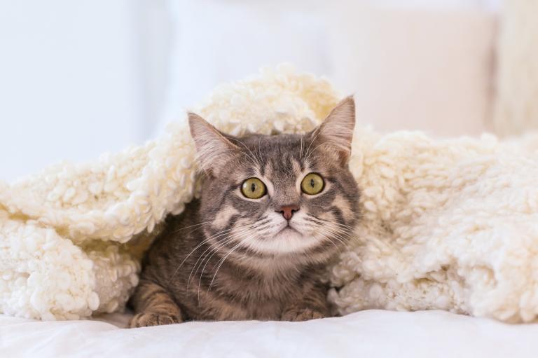 Gatto spaventato