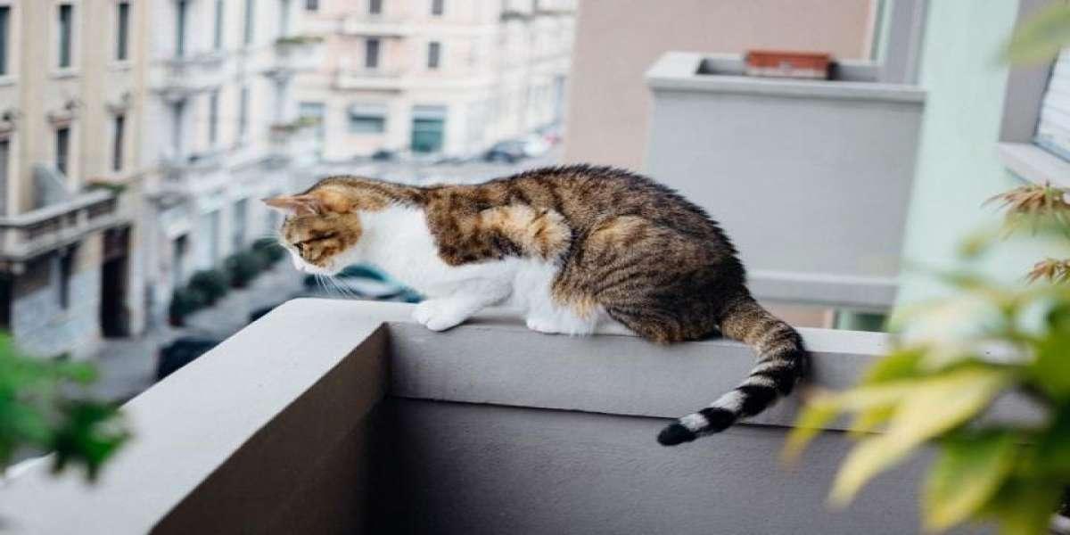 Gatto su un balcone