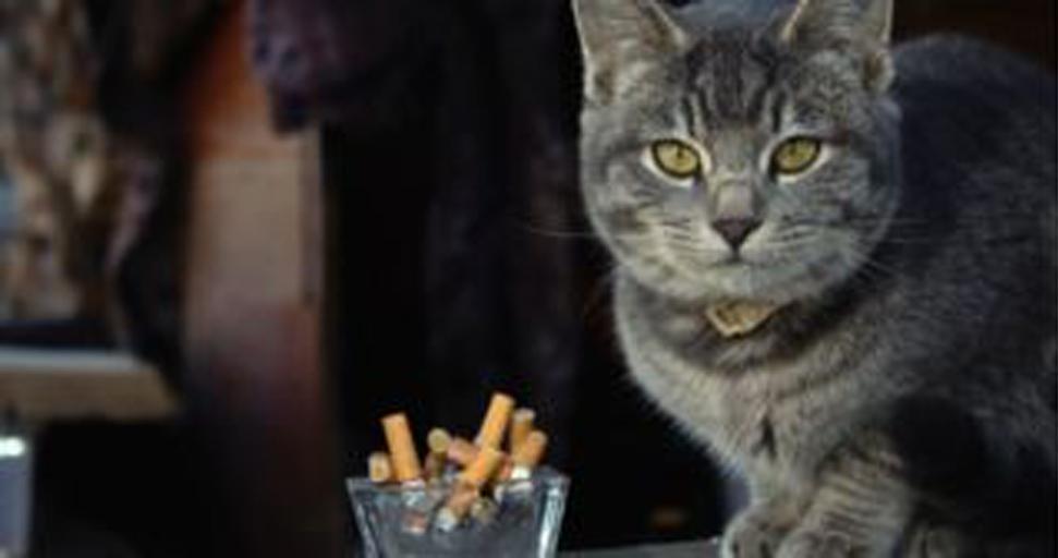 Gatto vicino a delle sigarette