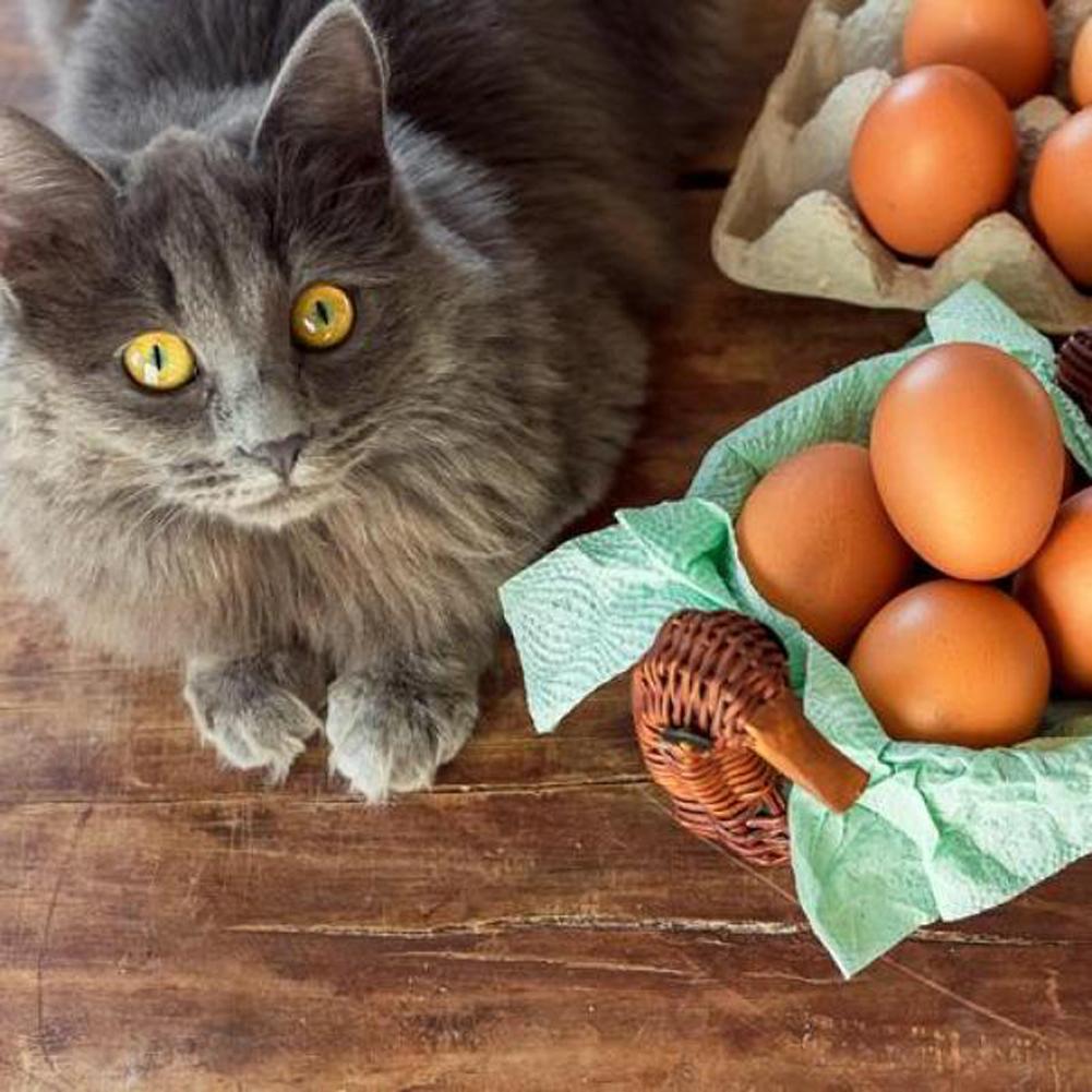 Gatto vicino a delle uova