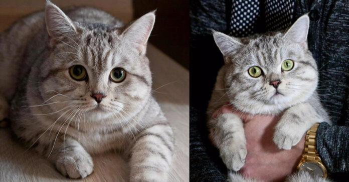 La storia del gatto Charles Utkins