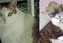 La storia del gatto Creme Puff