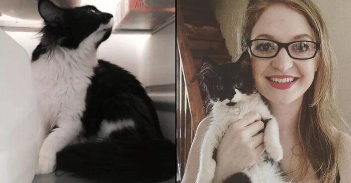 La storia del gatto Tali