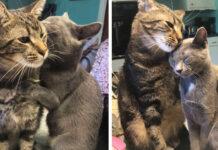 La storia dell'amicizia dei gatti Buddy e Hannah