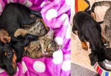L'amicizia del gatto Tequila con il cane Taco