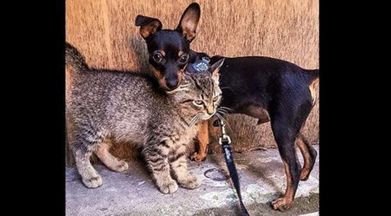 L'amicizia di Tequila e Taco, un gatto e un cane