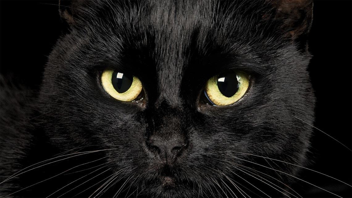 Occhi di un gatto nero