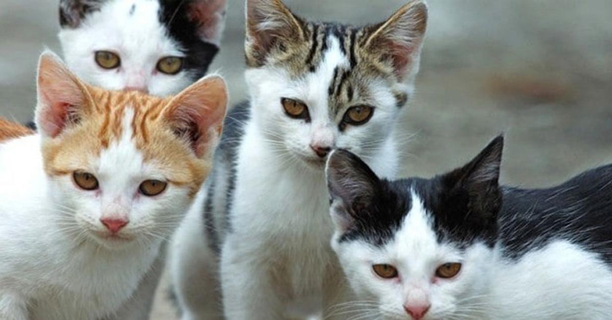 Quattro gatti che osservano