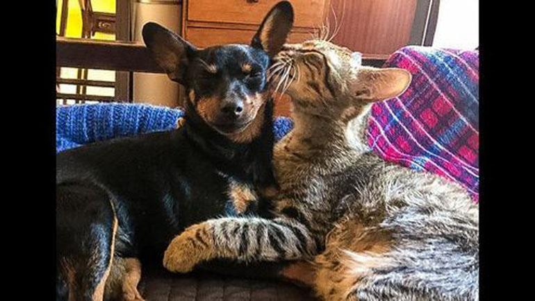 Un gatto amico con un cane