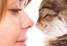 Un gatto che guarda negli occhi una donna