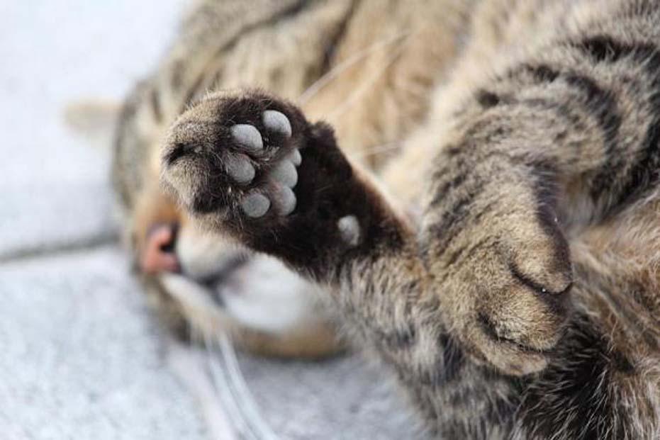 Zampine di un gatto