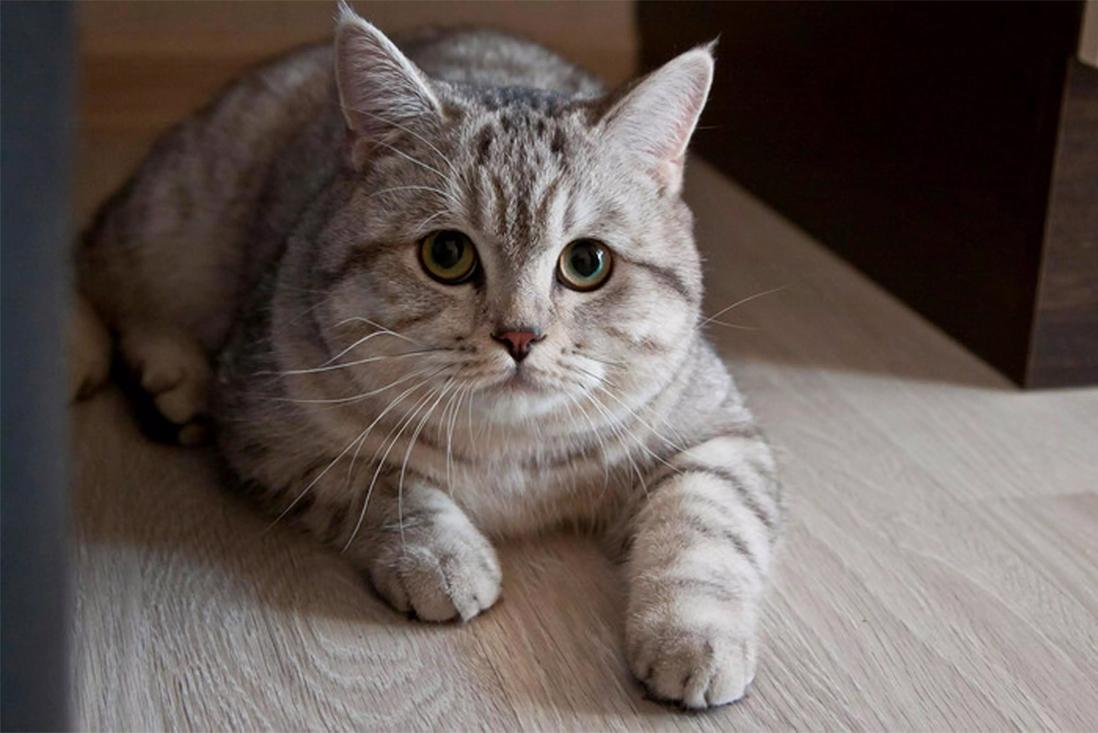 gatto Charles Utkins