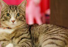 Perché i gatti in estate dimagriscono
