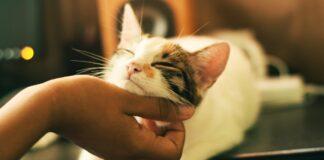 Gatto e fusa