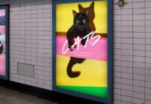 Annunci con i gatti