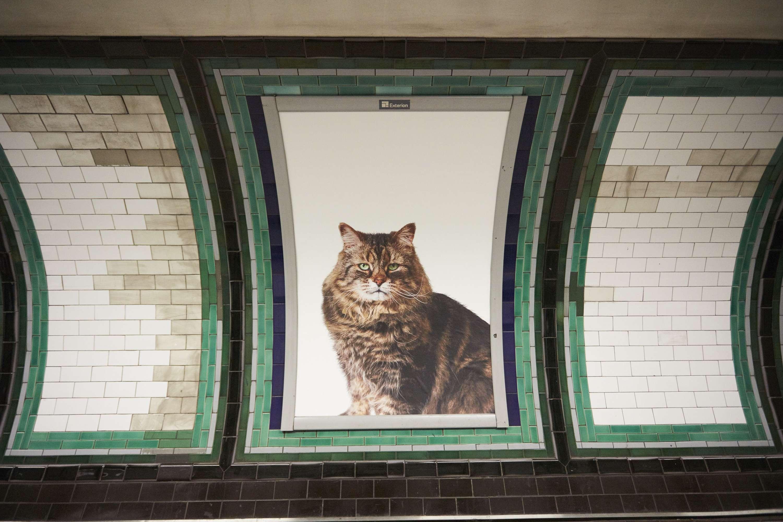 Annuncio pubblicitario gatto