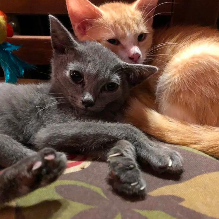 Due gatti vicino